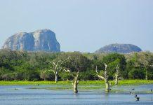 Elefantenfelsen im Yala Nationalpark im Südosten von Sri Lanka - © emjay smith / Fotolia