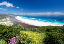 Das gewaltige Naturschutzgebiet Cape Floral im südwestlichen Südafrika gilt als Region mit der weltweit vielfältigsten Flora der Welt - © Neil Bradfield / Shutterstock