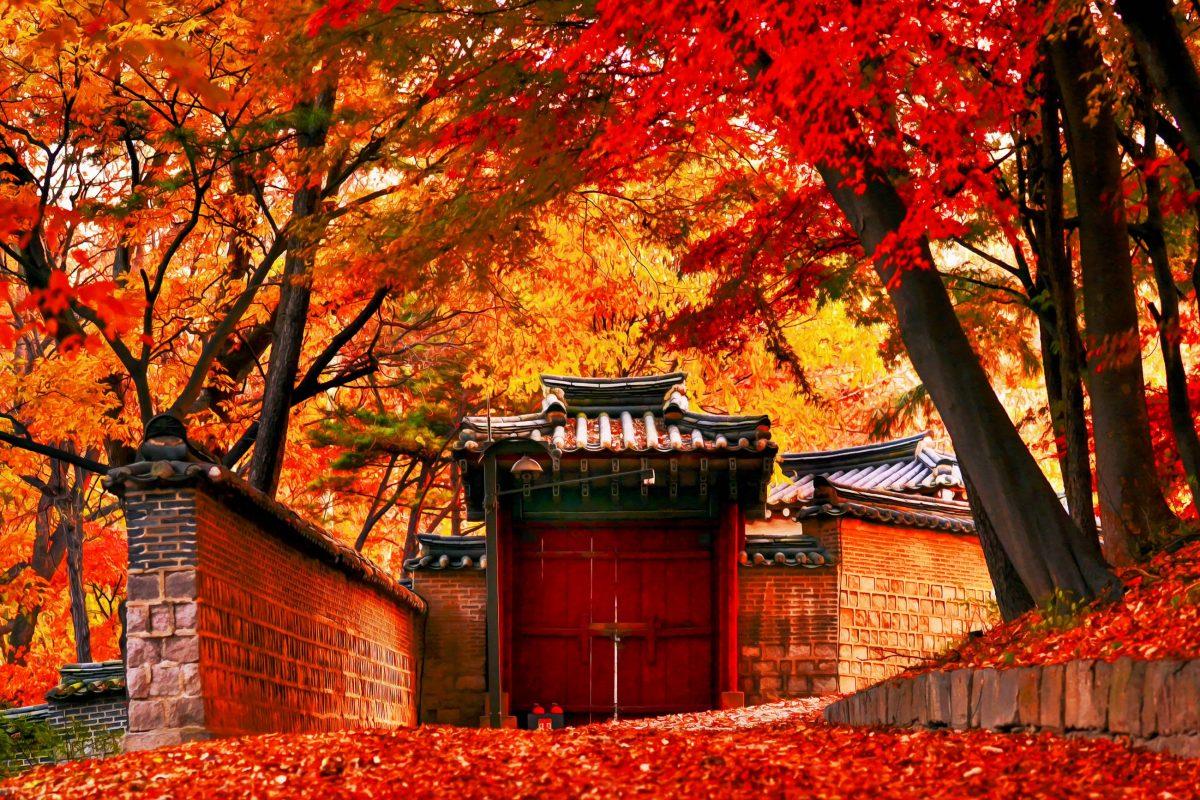 Herbstliche Farbenpracht in der prachtvollen Gartenanlage des Königsapalastes Changdeokgung in Seoul, Südkorea - © Moo teaforthree / Shutterstock