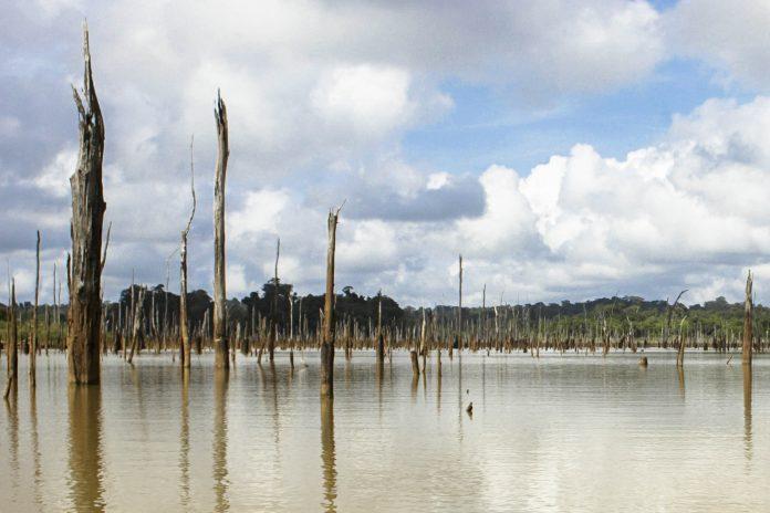 Boot im Brownsberg Naturpark im Südosten von Suriname  - © Jason Rothe  / Shutterstock