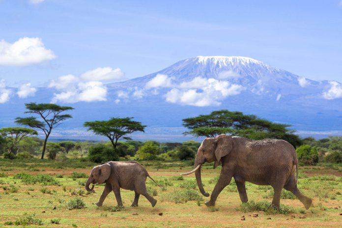 Elefanten vor dem Kilimandscharo, dem höchsten Berg Afrikas, Tansania - © Henry Schmitt / Fotolia