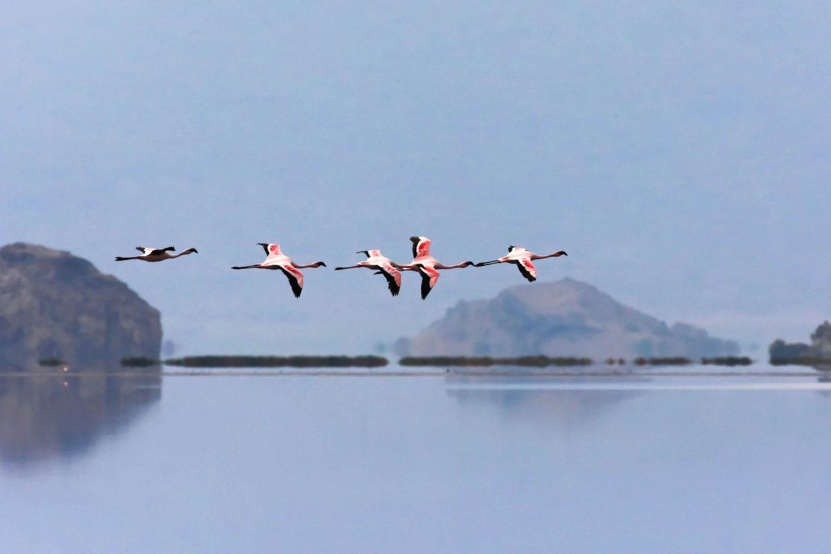 Flamingos fliegen über den Lake Natron in Tansania - © Pierre-Jean Durieu / Shutterstock