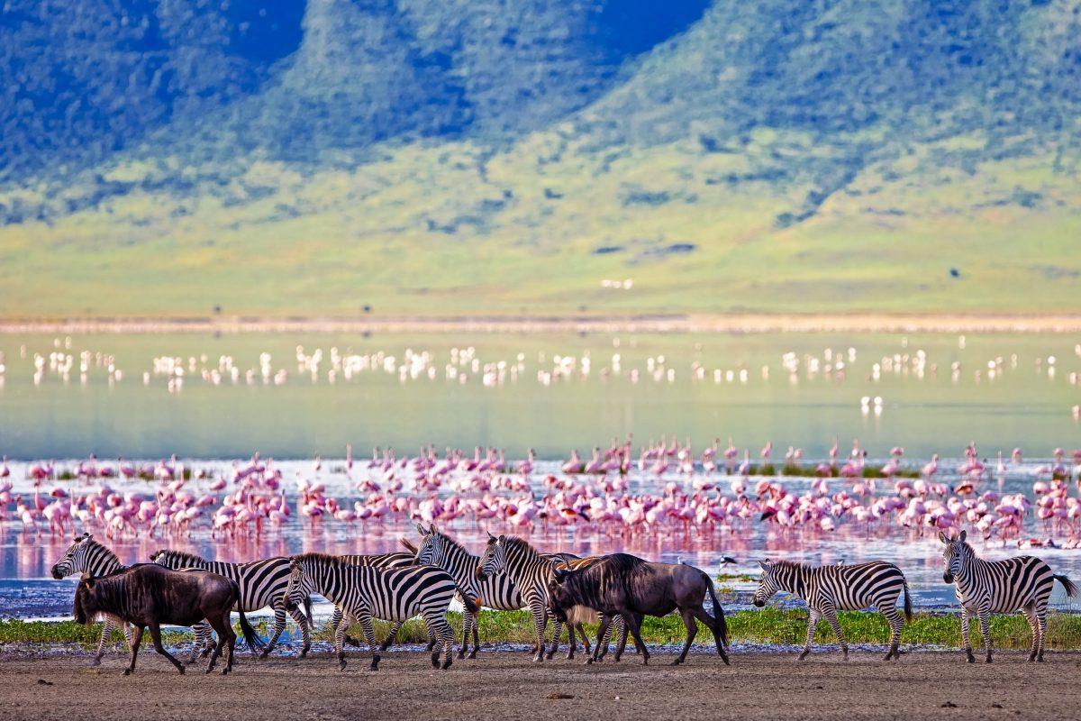 Zebras und Gnus neben dem See im Ngorongoro-Krater,im Hintergrund Flamingos, Tansania - © Pal Teravagimov / Shutterstock