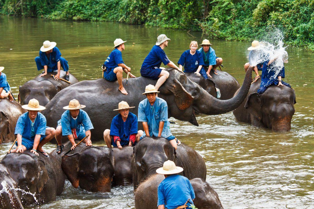 Badestunde im Fluss im Thai Elephant Conservation Center, Lampang, Thailand - © Sura Nualpradid / Shutterstock