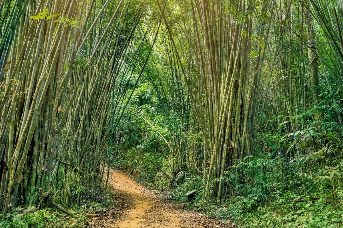 Die Pfade durch den Bambuswald im Khao Sok Nationalpark, Thailand, sind gut ausgetreten und können auf einige Faust erkundet werden - © View Apart / Shutterstock