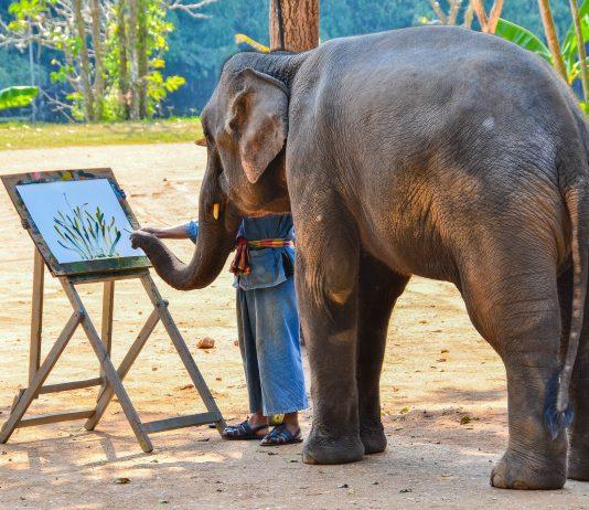 Ein Elefant malt ein Bild während einer Vorführung im Thai Elephant Conservation Center (TECC), Lampang, Thailand - © nathapol HPS / Shutterstock