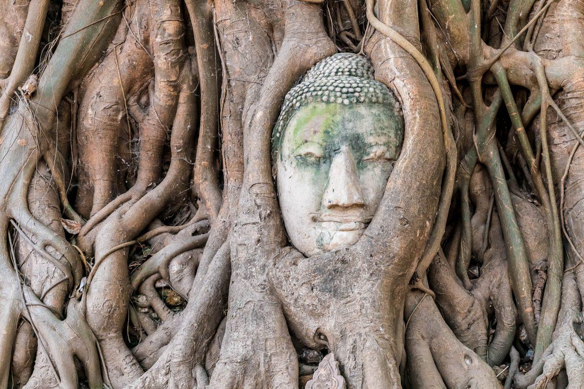 Neben dem Tempel Wat Mahathat aus dem Jahr 1374 lugt zwischen Baumwurzeln der Kopf einer von den Burmesen geköpften Buddhastatue hervor, Ayutthaya, Thailand - © sabino.parente / Fotolia