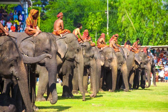 Ein Reihe von Elefanten beim jährlichen Elefanten-Festival in Surin im Nordosten Thailands - © Pius Lee / Shutterstock