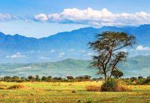 Afrikanische Savanne und die Ruwenzori-Berge im Hintergrund, Uganda - © Pichugin Dmitry / Shutterstock