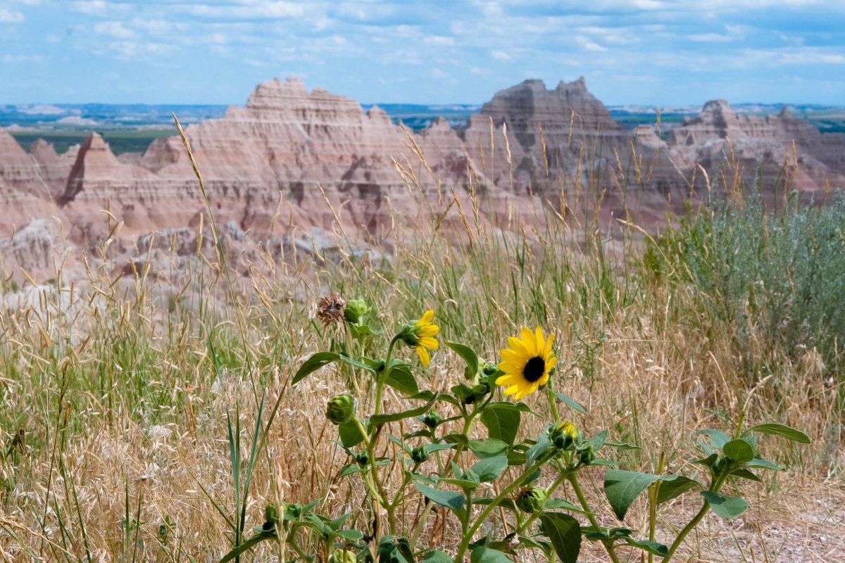 Auf einer knapp 50km langen Aussichtsstraße erhält man einen ersten Eindruck der Badlands in South Dakota, USA - © James Camel / franks-travelbox