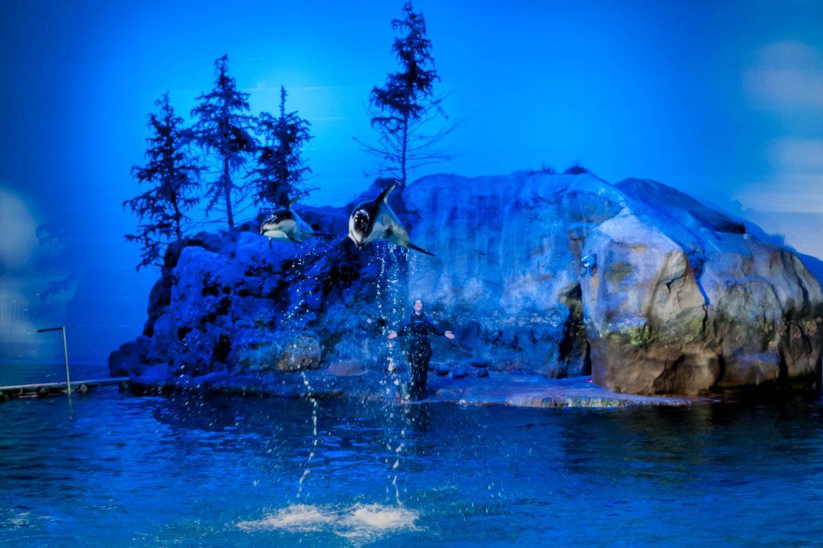 Die Delfin-Show macht offensichtlich auch den Tieren Spaß, Shedd Aquarium, Chicago, USA - © James Camel / franks-travelbox