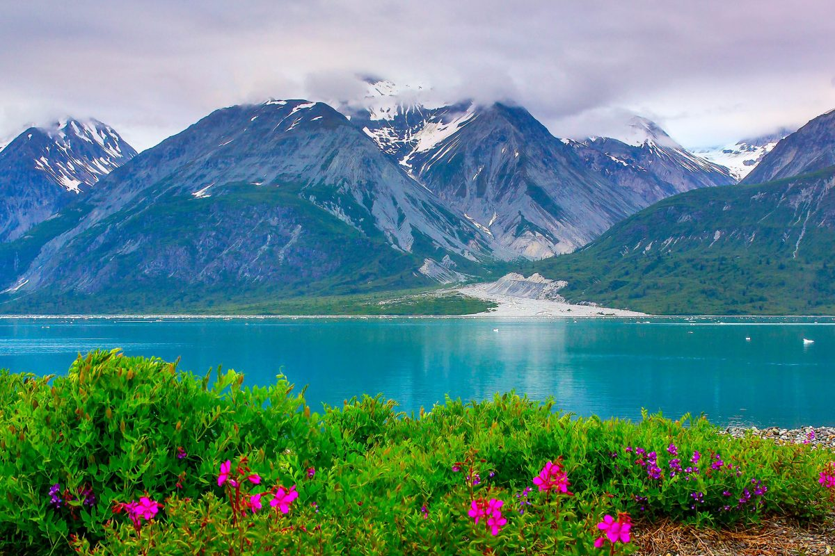 Im Sommer recken an den Ufern der zahllosen Gletscherseen farbige Blüten ihre Köpfe in den Himmel, Glacier Bay Nationalpark in Alaska, USA - © Sergey Yechikov / Shutterstock