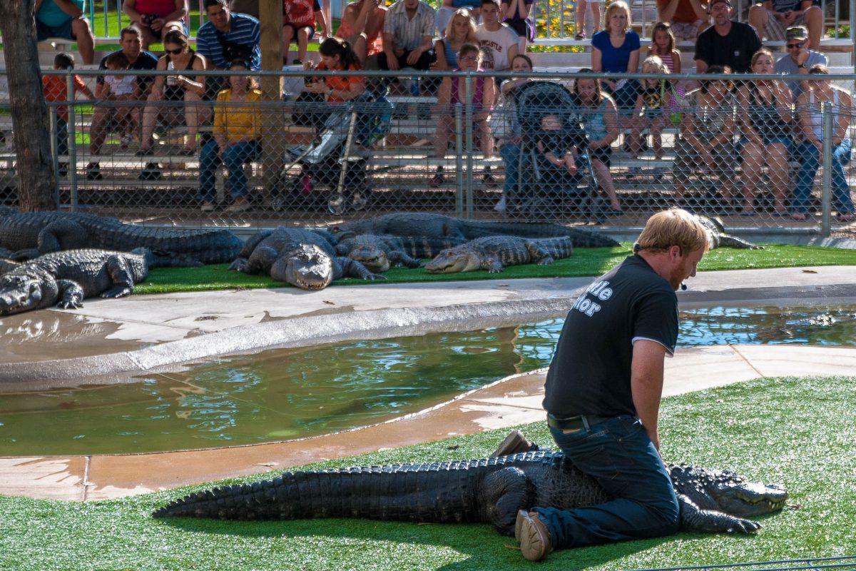 """In """"Crocodile Dundee-Manier"""" wird offenbart, wie man einen Alligator dazu bringt, sich tot zu stellen, Reptile Gardens in Rapid City, South Dakota - © James Camel / franks-travelbox"""