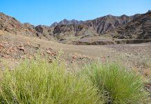 Blick auf eine malerische und faszinierende Berglandschaft von anmutender Schönheit im Wadi Maydaq, Fujairah, VAE  - © FRASHO / franks-travelbox