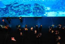 Von der ersten Etage in der Dubai Mall hat man einen tollen Ausblick auf das Dubai-Aquarium mit der weltgrößten Glasscheibe, hinter sich 33.000 Meerestiere tummeln, Dubai, VAE - © FRASHO / franks-travelbox