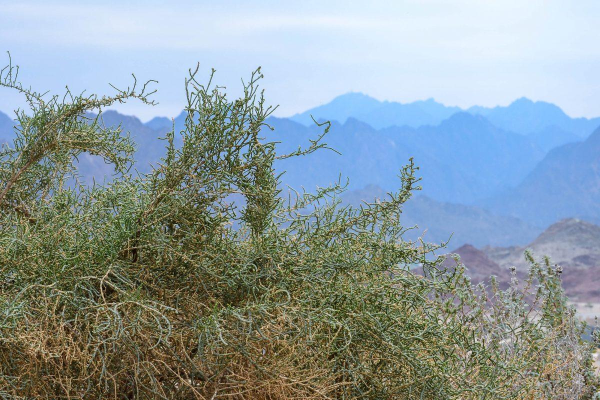 Hatta liegt auf etwa tausend Metern über dem Meer und ist vom Hajar-Gebirge umgeben, VAE - © FRASHO / franks-travelbox