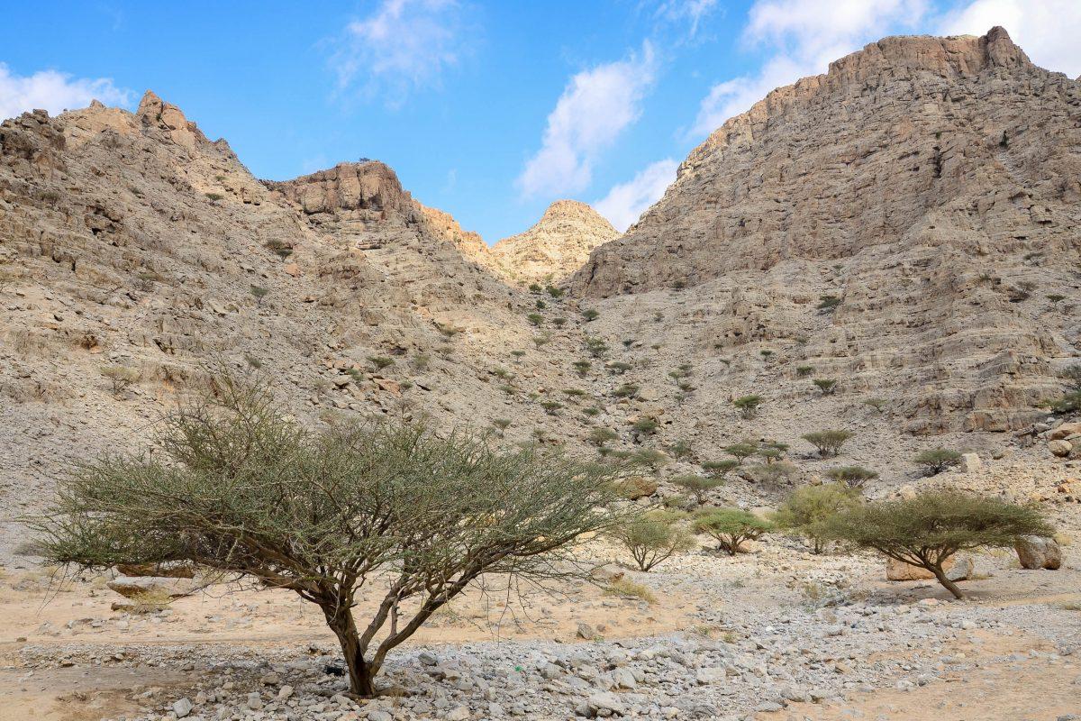 Trotz seines kargen ersten Eindrucks ist das Wadi al Bih im Emirat Ras al Khaimah Lebensraum zahlreicher Vögel, Geckos und sogar Kröten, VAE - © FRASHO / franks-travelbox