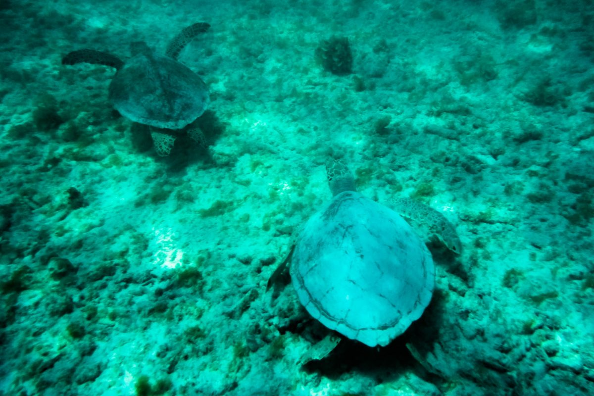 Der Mochima Nationalpark wurde als Meeresschutzgebiet geschaffen, um die faszinierende Unterwasserwelt an Venezuelas Küste zu schützen - © Lila Pharao / franks-travelbox