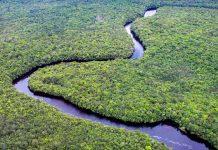 Der Orinoco in Venezuela und Kolumbien ist der zweitgrößte Fluss Südamerikas und der viertgrößte der Welt - © gary yim / Shutterstock