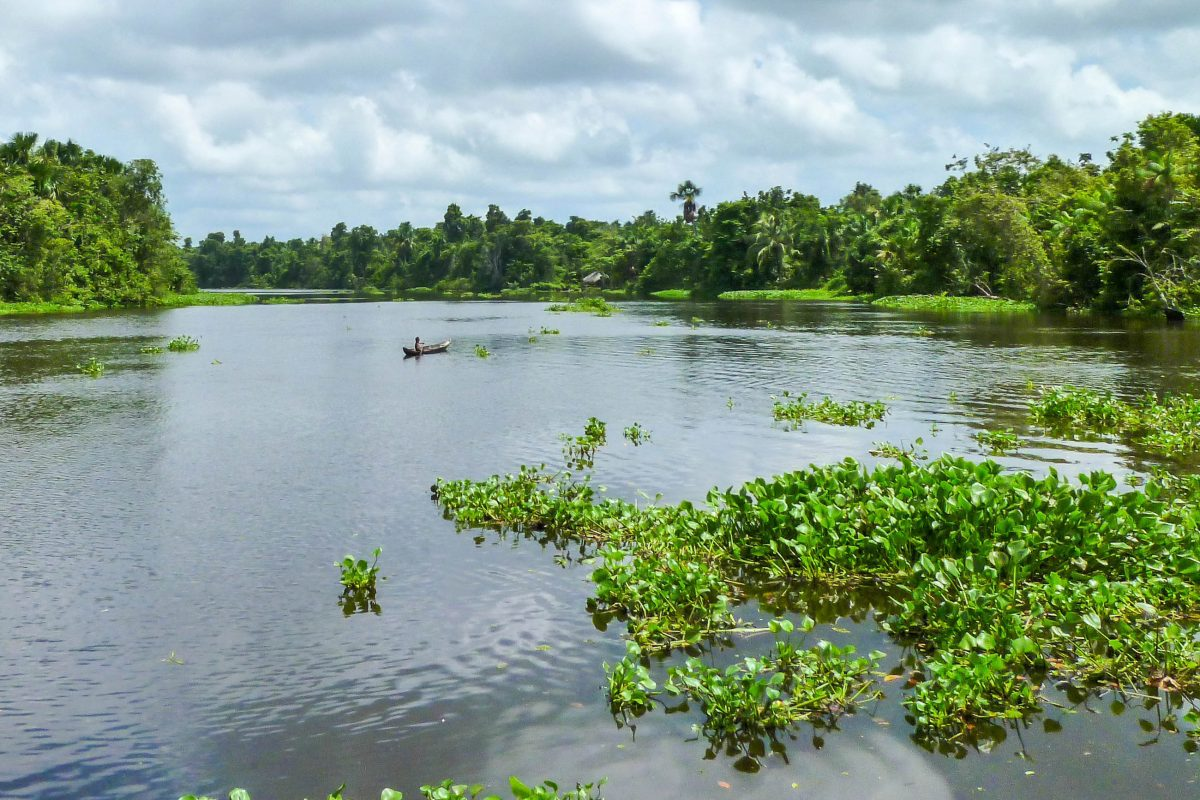 Die einfachste Art, die vielfältigen Sehenswürdigkeiten des Orinoco Delta zu erkunden, ist direkt auf dem Fluss, Venezuela - © Elizabeth Fernandez / Shutterstock