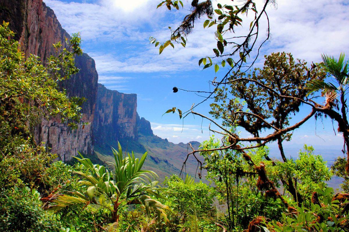 Die Strecken auf den Mount Roraima von Brasilien und Guyana aus beinhalten extrem steile, teilweise überhängende Klippen, die nur von ausgezeichneten Felskletterern bezwungen werden können - © Karin Wassmer / Shutterstock