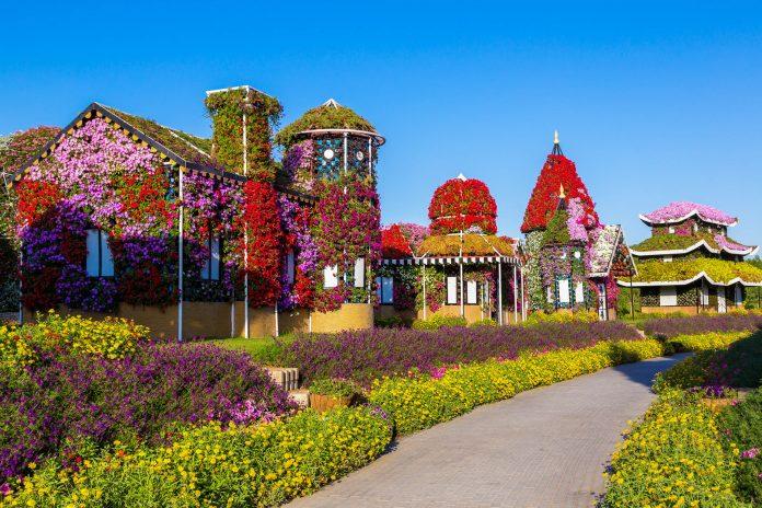 Der größte Blumengarten und das größte Schmetterlingshaus der Welt sind die Highlights in den bezaubernden Miracle Gardens in Dubai, VAE - © S-F / Shutterstock