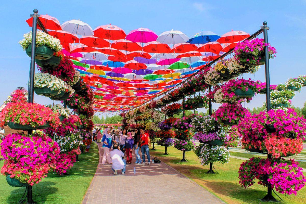 Die märchenhaften Blumen-Arrangements in den Miracle Gardens in Dubai, VAE, sind in riesigen Beeten gestaltet und wachsen auch in die Höhe - © Pen_85 / Shutterstock