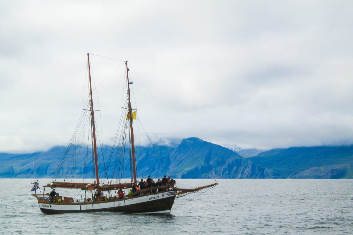 Ehemalige Walfangboote bringen Touristen von Húsavík durch die Skjálfandi-Bucht zum Whale Watching im Norden von Island - © FRASHO / franks-travelbox