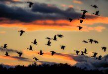 Hunderttausende Zugvögel nutzen den Ichkeul Nationalpark im Norden Tunesiens als Zwischenstop nach ihrer Reise über das Mittelmeer - © Sabine Schmidt / Shutterstock