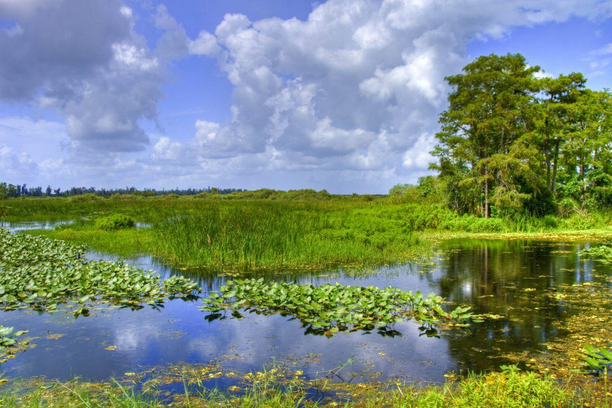 Wolken über der Landschaft des Everglades National Park, Florida, USA - © John A. Anderson / Shutterstock