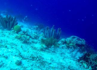In der atemberaubenden Unterwasserlandschaft von Klein Bonaire darf weder gefischt noch Anker geworfen werden - © Lila Pharao / franks-travelbox