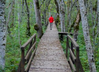 Die sumpfigen Passagen des Rundweges um den Biogradsko Jezero kann man auf Stegen begehen, Montenegro - © FRASHO / franks-travelbox