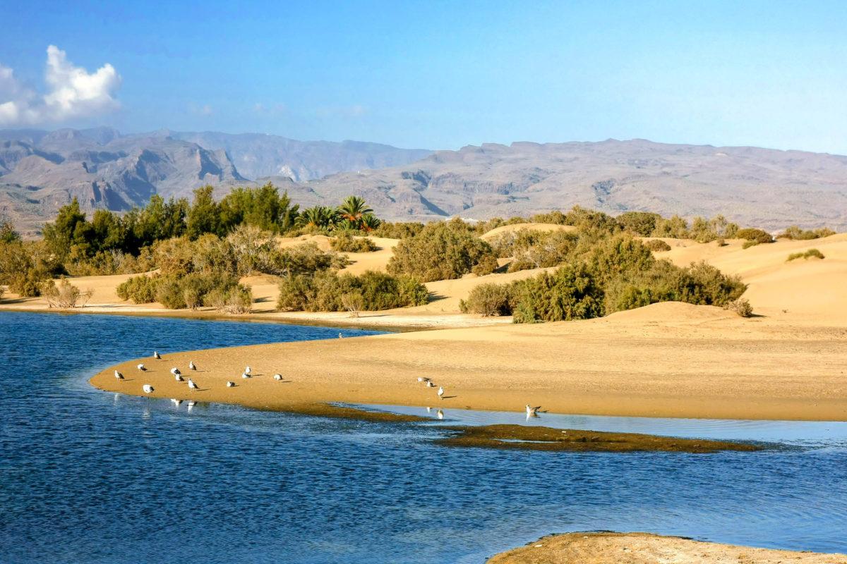 Die Dunas Maspalomas sind die einzige Sandwüste Europas - die hat sowohl für Partylöwen als auch für Familien oder Urlauber, die sich nach Ruhe sehnen, etwas zu biete, Gran Canaria, Spanien - © Anilah / Shutterstock