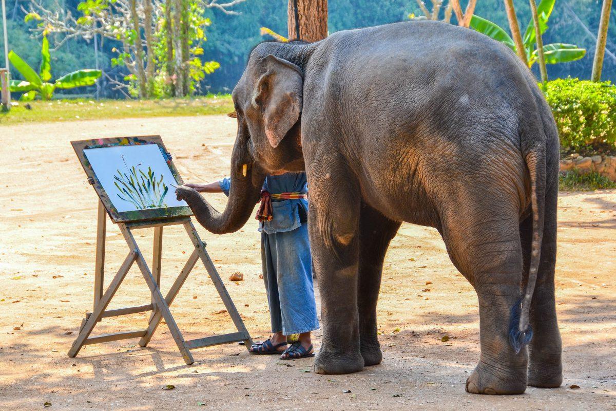 Elefant Der Malt