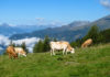 Dank der wunderbaren Aussicht von der Tschiernock Panoramastraße fällt die Entschleunigung leicht, Österreich - © FRASHO / franks-travelbox