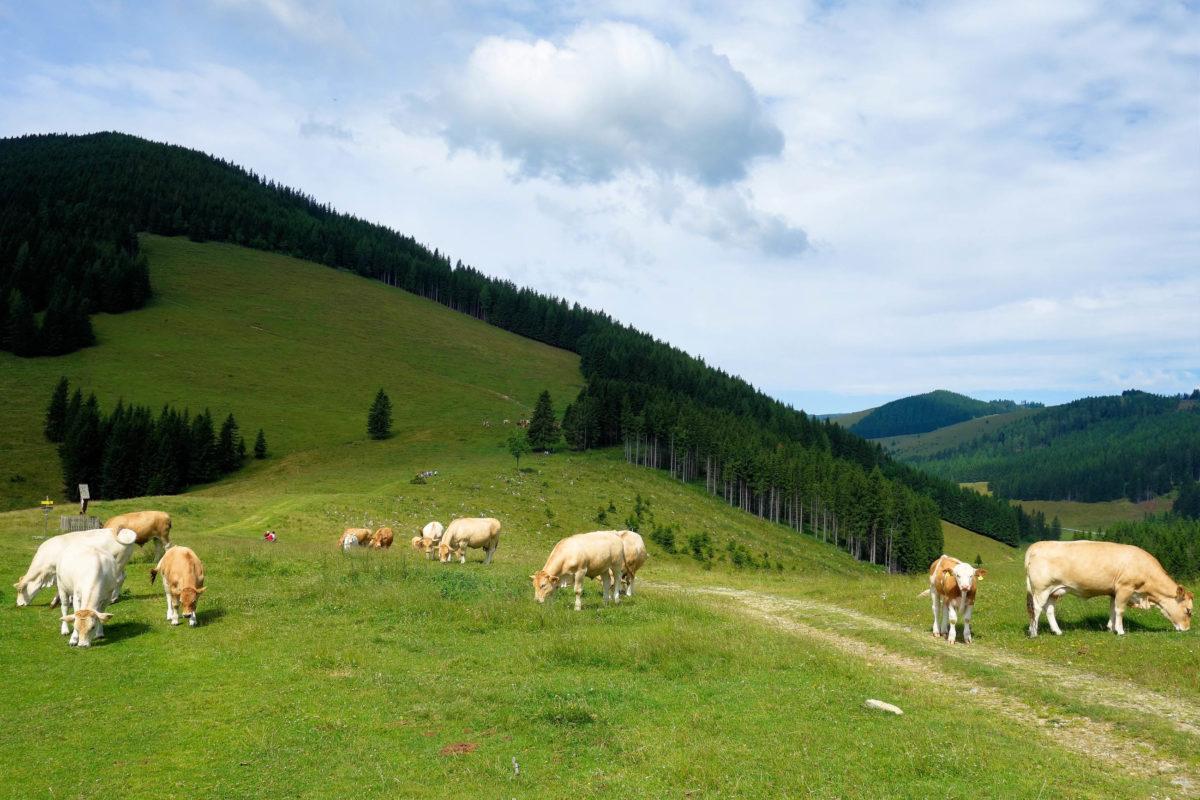 Rund um die sanften Bergwiesen der Teichalm im Südosten von Österreich warten zahlreiche Naturschönheiten darauf, entdeckt zu werden - © FRASHO / franks-travelbox