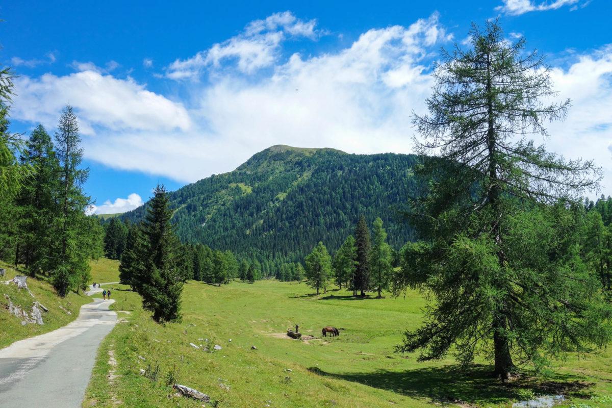 Der etwa zweistündige Rundwanderweg von der Egger Alm zur Dellacher Alm ist besonders beliebt, Österreich - © FRASHO / franks-travelbox