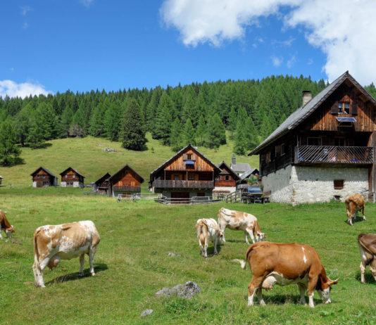 Die Egger Alm im Süden von Kärnten gehört zu den ursprünglichsten Almen Österreichs - © FRASHO / franks-travelbox