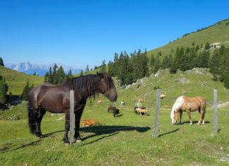Mit dem Naturpark Dobratsch und der Villacher Alpenstraße liegt das Hochgebirge nur 20 Autominuten von Villach entfernt, Österreich - © FRASHO / franks-travelbox