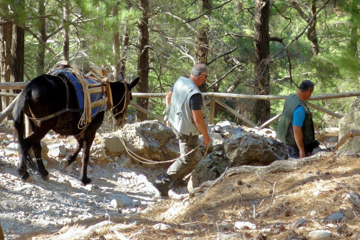 In der Samaria-Schlucht auf Kreta, Griechenland, sind ständig Parkranger mit Rettungs-Mulis unterwegs - © FRASHO / franks-travelbox