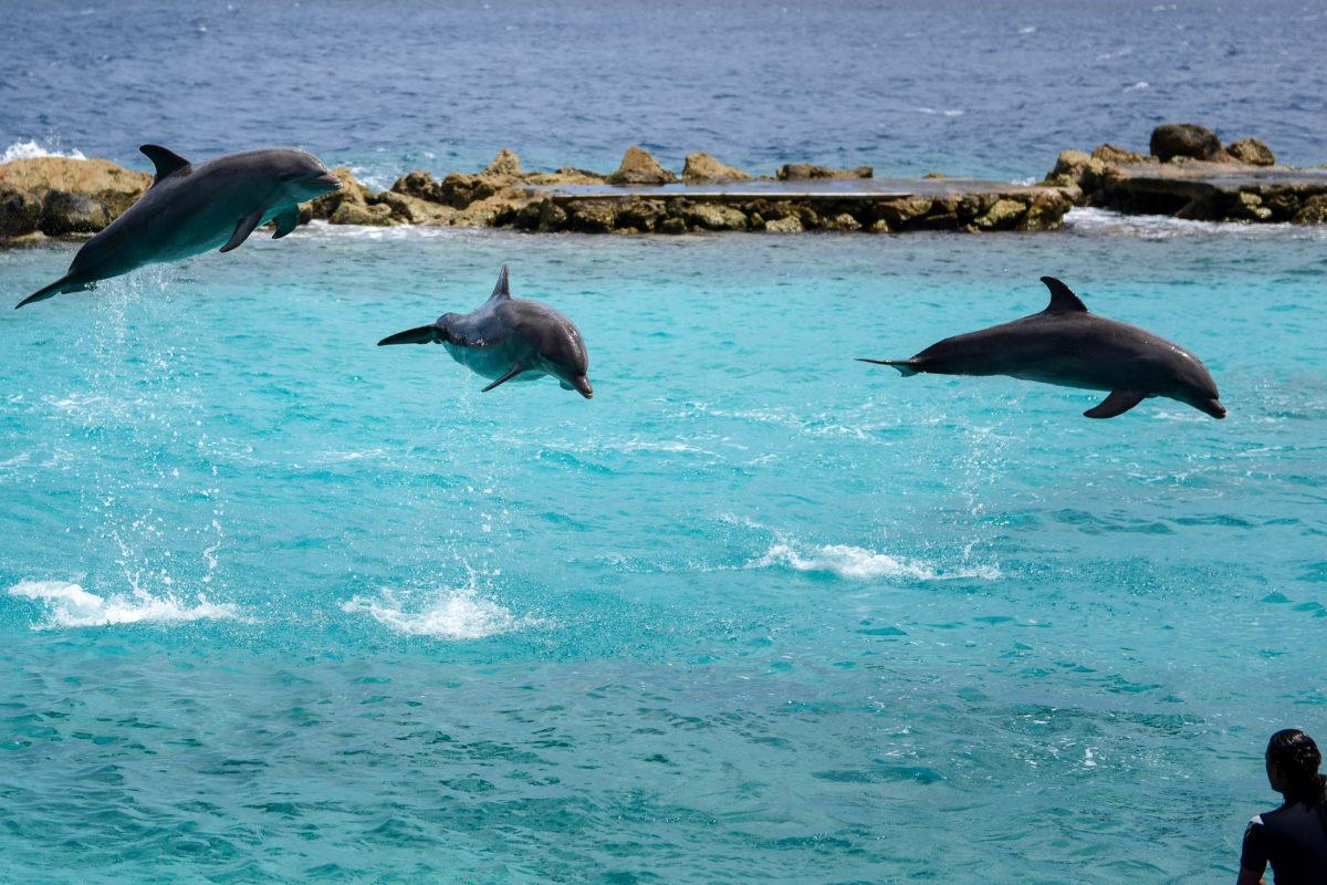 In der natürlichen Lagune des Sea Aquariums, die direkt ins Meer reicht, zeigen die Delfine und ihre Trainer diverse Kunststücke, Curaçao - © James Camel / franks-travelbox