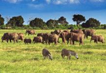 Die Landschaft im Tsavo-Ost-Nationalpark ist nicht so abwechslungsreich wie die des Tsavo-West und besteht zum Großteil aus Dornbuschsavanne, Kenia - © Andrzej Kubik / Shutterstock