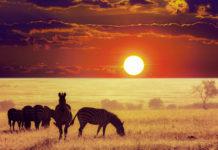 """""""Serengeti"""" kommt aus der Massai-Sprache und bedeutet so viel wie """"das endlose Land"""", Tansania - © Galyna Andrushko / Shutterstock"""