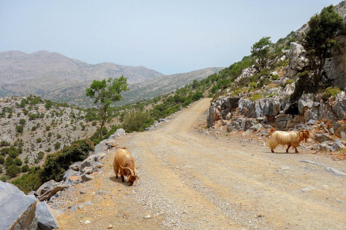 Von Agios Nikolaos an der Küste kommend führt eine Piste von der Ortschaft Kritsa zur Lassithi Hochebene, Kreta, Griechenland - © FRASHO / franks-travelbox