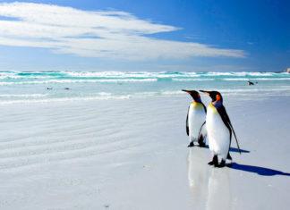 Auf der Inselgruppe der Falklands, erlebt man eine raue aber schöne Natur und auch einige ungewohnt anmutende europatypischen Besonderheiten - © Neale Cousland / Shutterstock