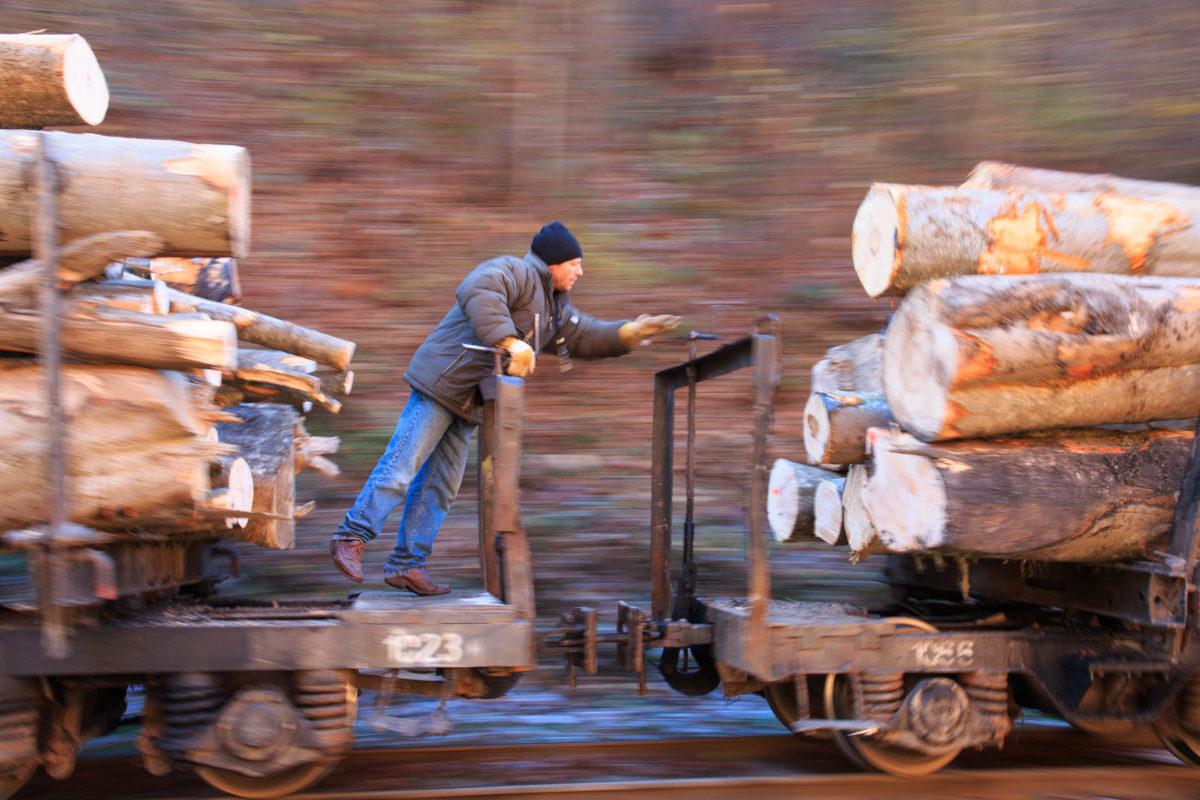 Die Wassertalbahn in Rumänien transportiert neben Baumstämmen auch Touristen durch die idyllischen Wälder der Karpaten - © Emily Marie Wilson / Shutterstock
