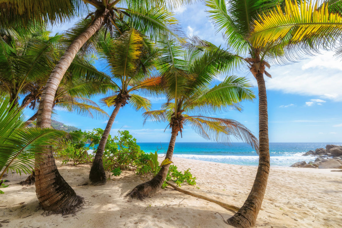 Der Anse Intendance an der Südküste hat wohl die höchsten Wellen auf ganz Mahé zu bieten, Seychellen - © Lucky-photographer / Shutterstock