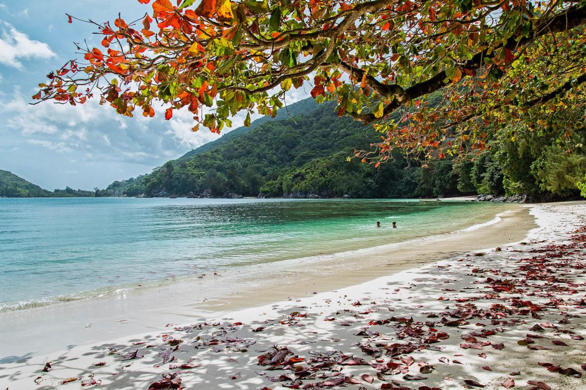 Der Port Launay Strand ist mit seiner schillernden Unterwasserwelt Teil eines Marine-Nationalparks auf der Seychellen-Insel Mahé - © Igor Samoiliuk / Shutterstock