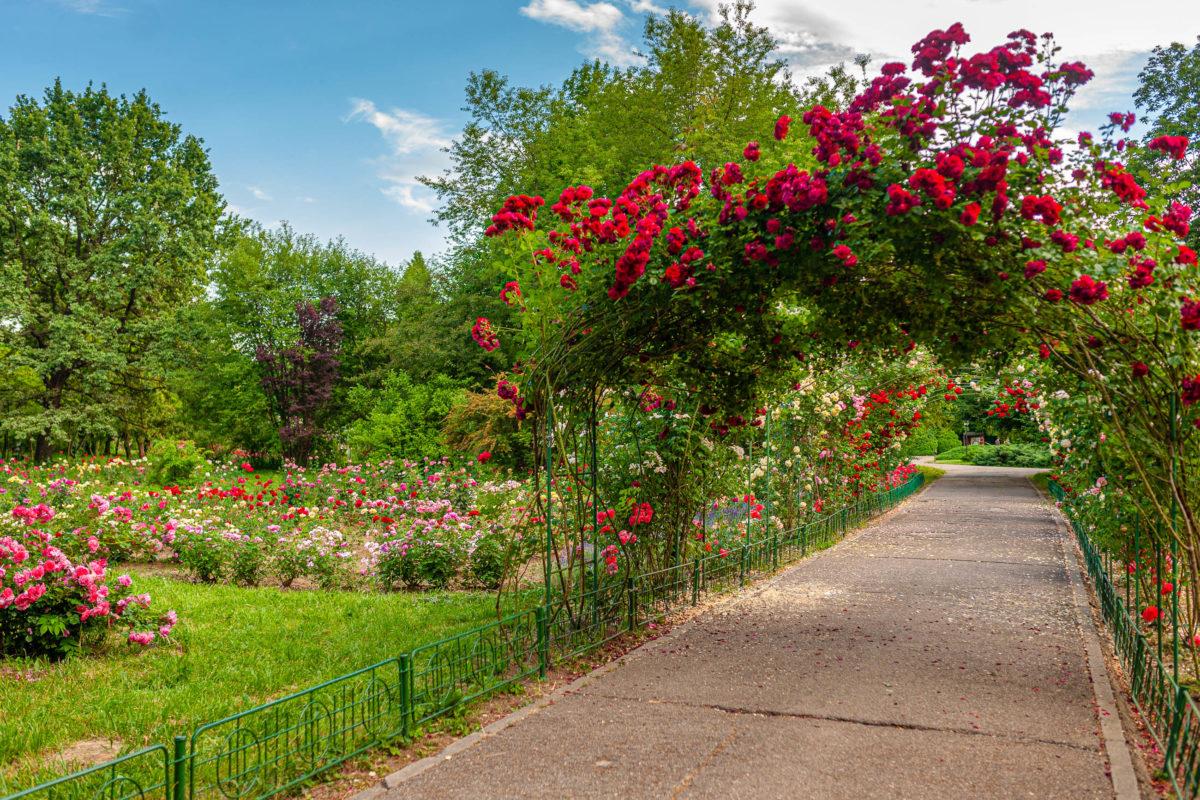 Im Botanischen Garten werden seit 1874 über 500 Pflanzenarten von der Universität von Bukarest betreut und gepflegt, Rumänien - © Dragos Asaftei / Shutterstock