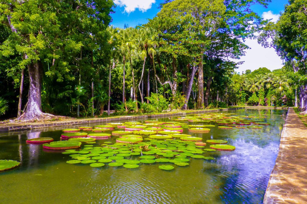 Der Seewoosagur Ramgoolam Botanical Garden auf Mauritius - auch Botanischer Garten von Pamplemousses genannt - zählt zu den schönsten Gärten der Welt - © boivin nicolas / Shutterstock
